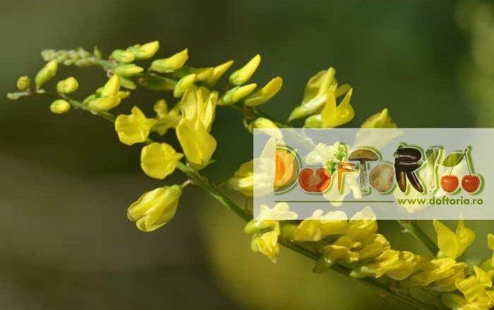sulfina doftoria