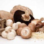 Ciupercile medicinale şi rolul lor în organism