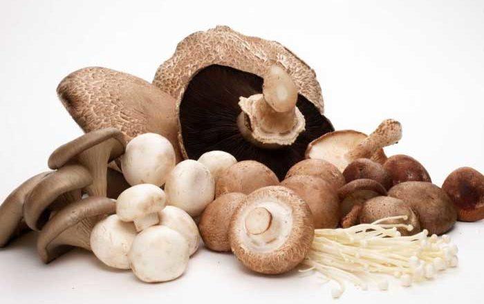 Ciupercile medicinale doftoria