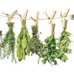 Uscarea şi păstrarea corectă a plantelor medicinale