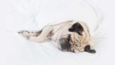 argumente pentru care să tragi un pui de somn scurt doftoria