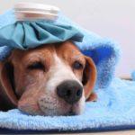 Gripa – cum combatem simptomele ei