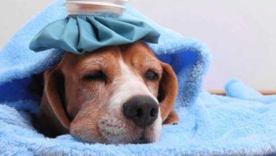 gripa raceala combate doftoria