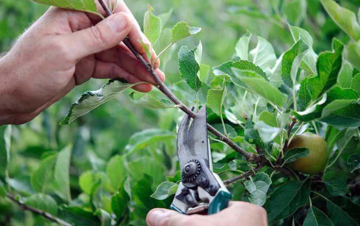 Cum şi când se culeg plantele medicinale doftoria