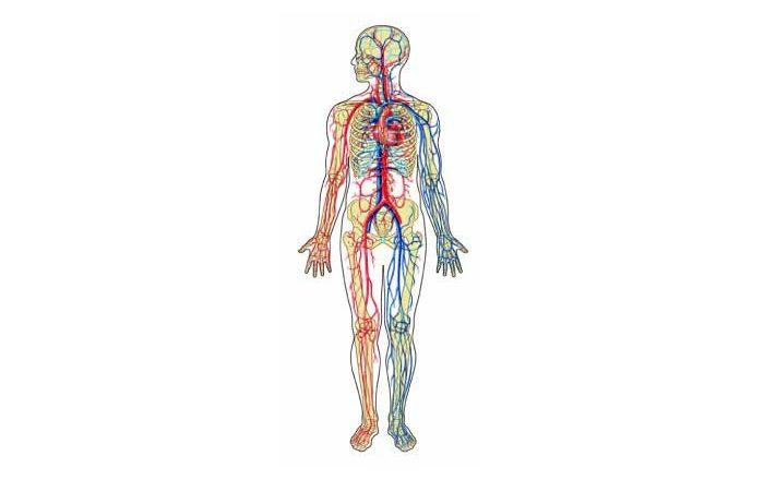 Circulația sângelui doftoria