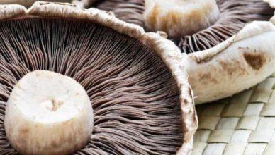 Ciuperci demența doftoria