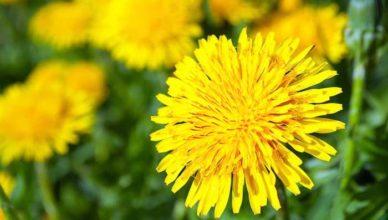 Plante de primăvară doftoria