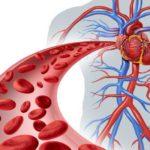 10 remedii naturiste pentru circulaţia sângelui (ritm cardiac, palpitaţii, aritmii etc.)