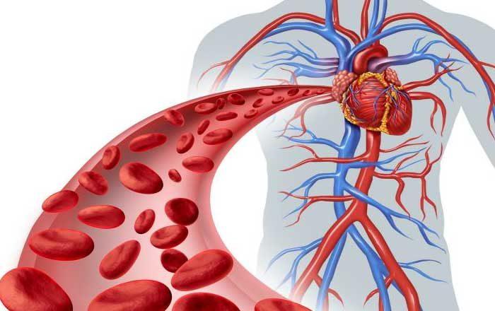 remedii pentru circulaţia sângelui