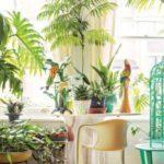 5plante care îţi purifică aerul din casa ta