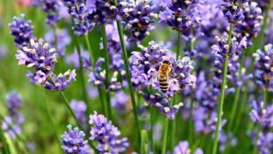 Remedii naturale care ţin insectele la distanţă