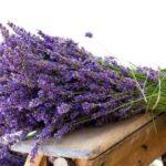 Plante care te pun pe picioare şi grăbesc vindecarea