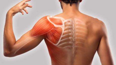 remedii pentru durerile musculare