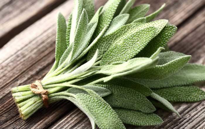 salvie tratament naturist ceai de salvie