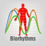 Bioritm: cum poate fi reglat şi ce este bioritmul