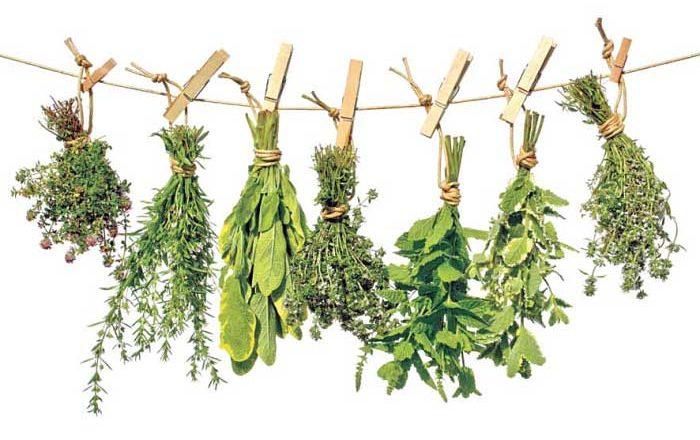 Uscarea plantelor medicinale doftoria