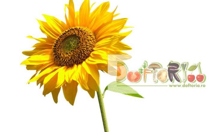 floarea soarelui doftoria