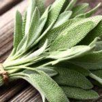 Salvie: tratamente naturiste din salvie şi ceai de salvie