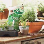 Cum să cultivi Oregano în casă