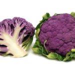 Conopida mov (violet): beneficii, proprietăți și despre semințe
