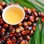 Ulei de palmier: beneficii și contraindicații
