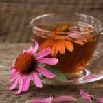 Ceai de echinaceea: beneficii, utilizări și contraindicaţii
