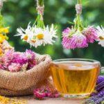Ceai de rostopască: beneficii şi contraindicaţii
