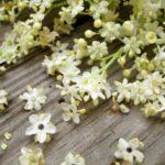 Flori de soc: beneficii, contraindicații și utilizări